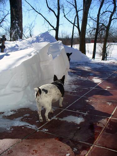 2011-02-02 - Snow Pile! - 0002