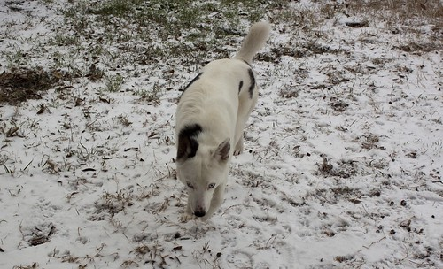 Snow Day at Home 17 - Blue Sniffing