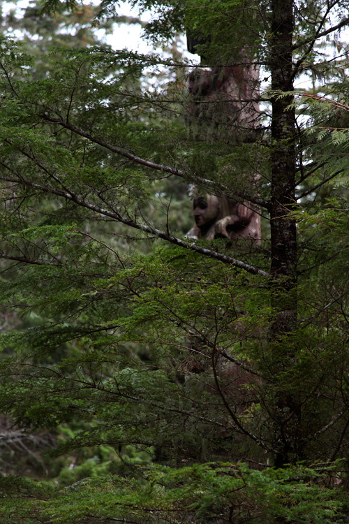 totem behind a tree, Totems Historic District, Kasaan, Alaska