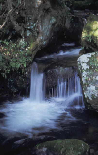 小さな渓流のフリー写真素材
