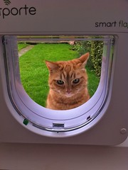 Erm I no like dis! (Mrs eNil) Tags: cat ginger kitten martha kitty flap microchip gingercat iphone catdoor catflap orangekitty lauraohalloran microchipcatflap flapofdoom