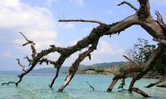 Andaman (Monsoon Lover) Tags: blue sea india beach nature flickr bluewater snorkeling tsunami andaman sudipguharay havlockisland andamantour