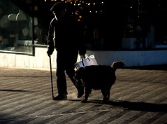 breath (malidinapoli) Tags: street winter light shadow dog cold netherlands cane breath nederland denhaag hond hund thehague adem kou kälte gassi atem odem