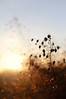 And to their echoes. (next_in_line) Tags: light sky sun plant blur evening glow bokeh echo