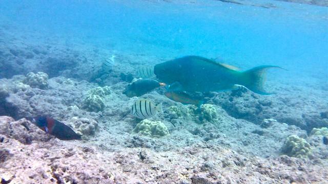 Hanauma Bay, Oahu, Hawaii, snorkeling
