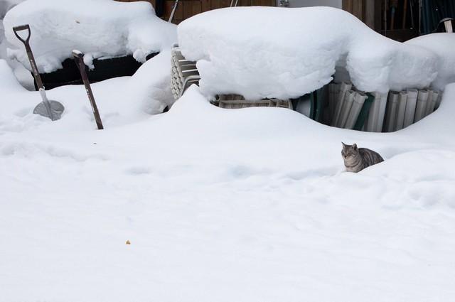 雪の木崎湖キャンプ場にて