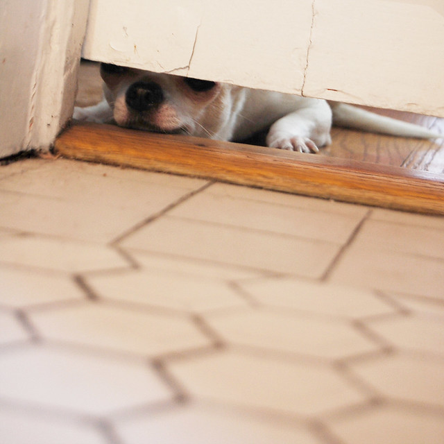 blanco peeking_1
