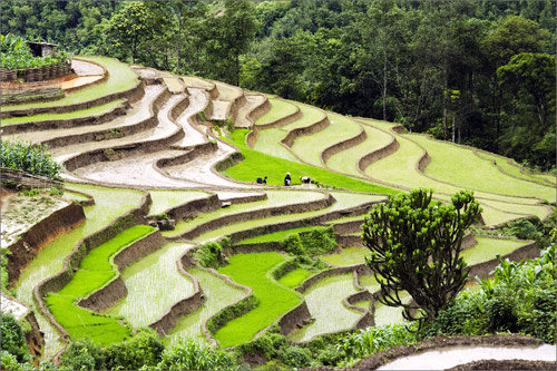 Hard-working day on the terraced fields