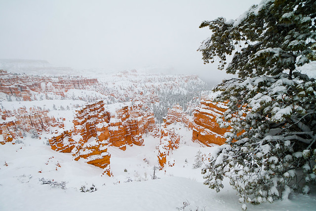 Bryce National Park in the snow-24.jpg