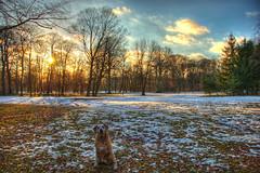 hdr - waiting for the summer (sven & nova) Tags: old trees winter cloud dog sun snow grass forest germany garden europe englischergarten hdr englishgarden kinga