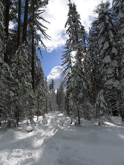 Rough snowshoe and ski trail