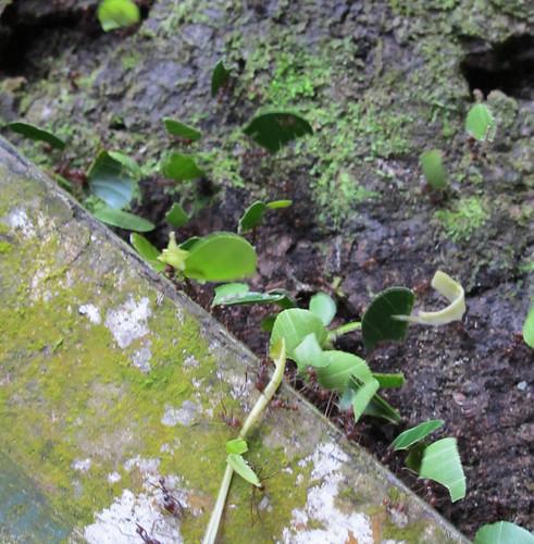 leaf_cutters