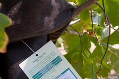 stritz-1580.jpg (jstritz) Tags: plant fhsp