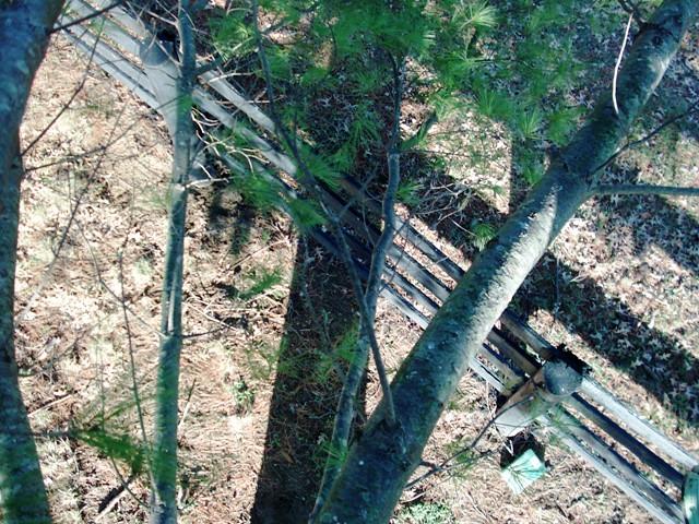 tree climbing 046