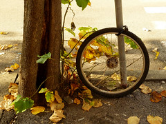 (Francesco Tassara) Tags: street city autumn urban tree bike wheel foglie leaf poetry strada neglected route sidewalk bici poesia foglia albero autunno abandonment verse ruota bicicletta marciapiede catena abbandono francescotassara