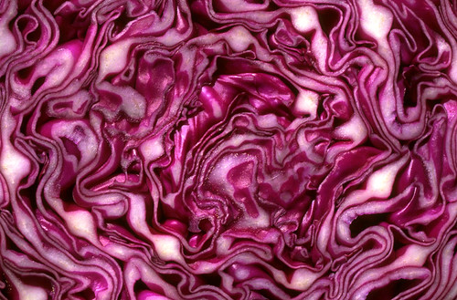 Red Cabbage by Daveidaho