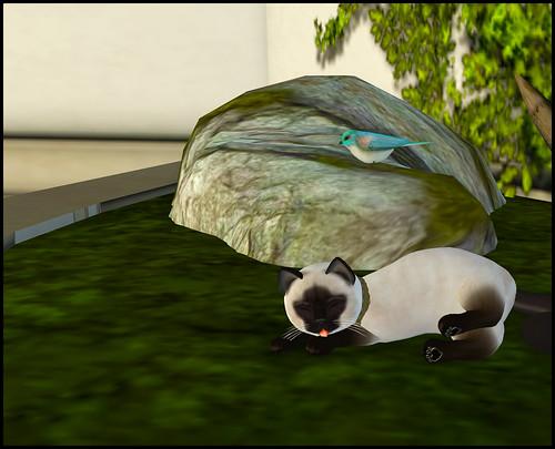 KittyCats Store 3