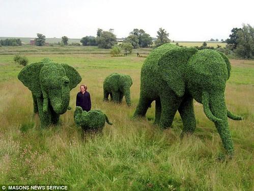gardening ideas, hmm?