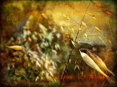 Nature #13 (Calling you) (Judex) Tags: naturaleza nature leaves landscape hojas paisaje dreamcatcher infinestyle truthandillusion