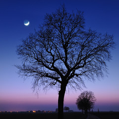 moonrise (pierre hanquin) Tags: blue trees winter light sunset moon color colour tree nature color