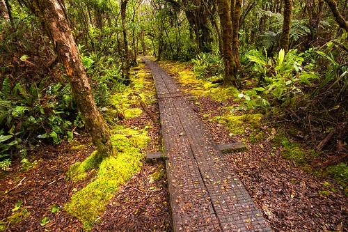 Pihea Trail Boardwalk
