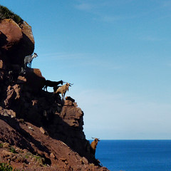 Wild goats standing at the edge of Menorca (Bn) Tags: blue red sea moon holiday beach water animal forest swimming swim landscape geotagged island back high dangerous spain sand woods mediterranean crystal cove dunes dune rocky peaceful goat lagoon calm cliffs unesco formation clear virgin caves pines edge limestone vegetation nudist coastline remote dare calas nudity bays desolate climate isolated menorca laid secluded minorca reddish unspoiled balearic maan watercrystal hillsides naturists wildgoats nuturism caladelpilar geomenorca coastlinenatural environmentsunescobiosphere reservemediterranean waterparadiseparadise beachspainbalearicsmenorcaturquoise blueminorcabalearic islandsrocky geo:lon=3973548 geo:lat=40052499