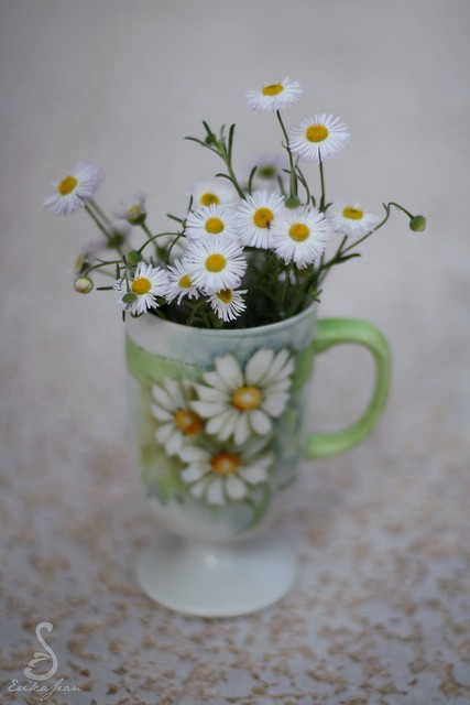 Daisies in a Daisy Cup
