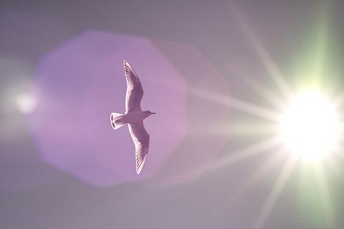 フリー写真素材, 動物, 鳥類, カモメ科, カモメ, 日光・太陽光線,
