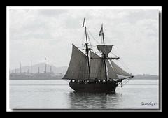 enterprize fr (Canon makes it easy !!!!!) Tags: bw reflection bay boat ship australia sail tall geelong anglesea platinumheartaward snoad snoady robsnoad
