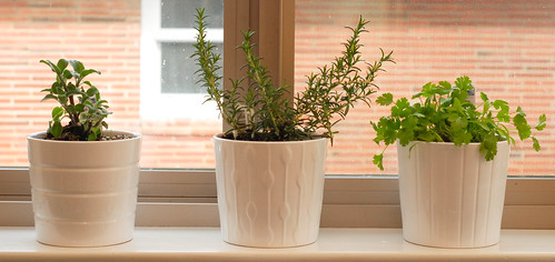 Plants on the Kitchen Windowsill