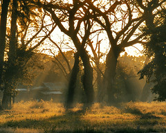Stay in the Sunshine (SweetCaroline) Tags: trees sunrise gb rays pk zuiko sweetcaroline tarlac 1442mm e520