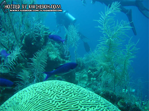 Belize Barrier Reef 01