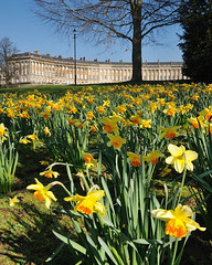 Springtime in Bath (Stu Meech) Tags: blue light shadow sky sunlight tree vertical nikon bath bare branches hard lee 1750 filters grad tamron f28 daffodils foreground daffs royalcrescent 5x4 06nd d300s