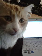 helping me edit a term paper (Jauaris Jamar Jauarson-Lamar) Tags: cat catman hethinkshespeople
