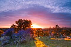 Sun Star (©Helminadia Ranford) Tags: travel light sunset sun tree sonora landscape star oak valley helminadia