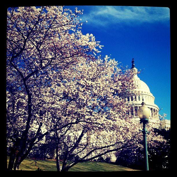 US Capitol Blooms