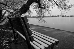 snowy sunrise (cherry blossom festival) (Dwood Photography) Tags: bw white snow black festival cherry washingtondc dc washington memorial blossom basin national dcist jefferson tidal jeffersonmemorial nationalcherryblossomfestival dwoodphotography dwoodphotographycom