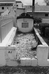 Lapeyrouse Cemetery Port of Spain Trinidad (Ray Cunningham) Tags: cemetery port spain trinidad lapeyrouse