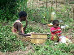 Harvesting groundnuts, even the smallest helping (Nasaldog) Tags: africa boy woman baby child basket harvest ghana peanut jirapa groundnut babile upperwestregion chauw childhealthactionupperwest