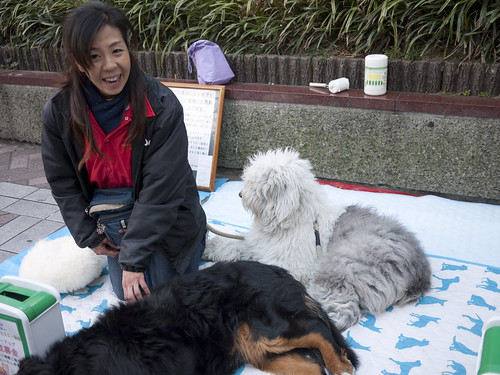 Therapy dogs (and human) raising money in Yokohama, Japan