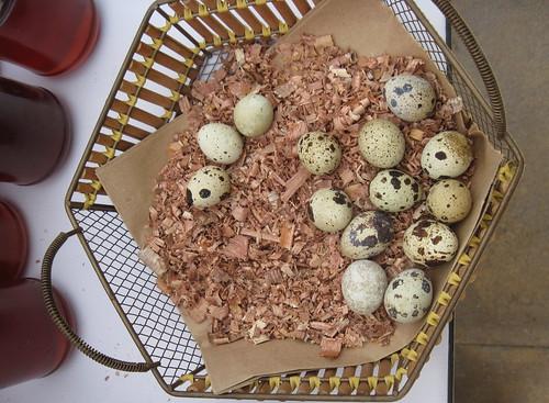 Fresh Eggs at Dubai Farmer's Market
