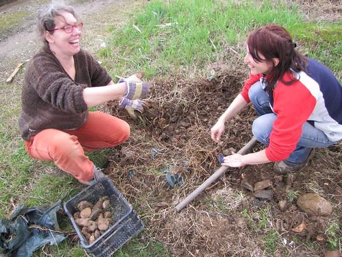 compostiere agli orti regolamentati 43