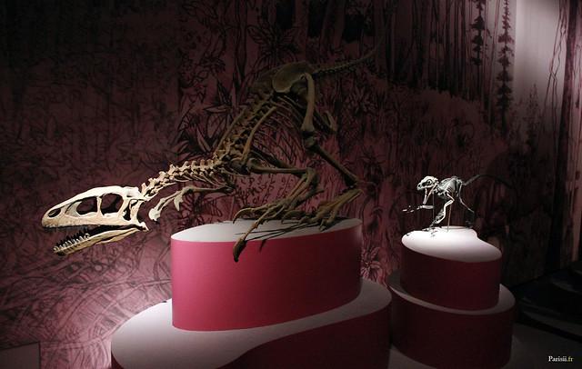 Squelettes de dinosaures