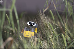 Hi i am here! (Abdulkreem Al-delaigan | ) Tags: apple flickr stilllive  walle  2011  canonef135mmf2l    abdulkreemaldelaigan   abdulkreem aldelaigan