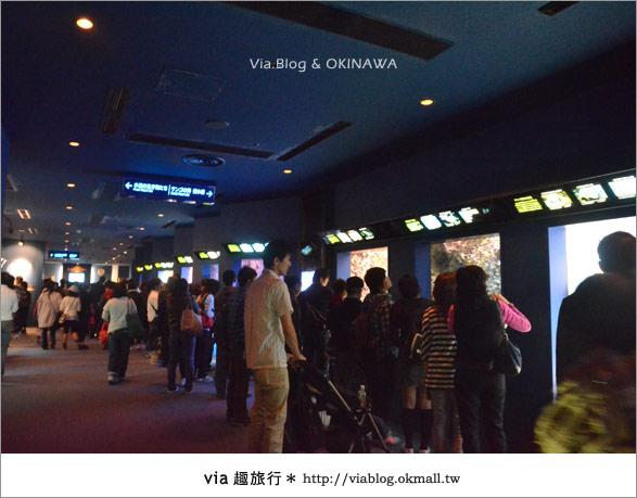 【沖繩景點】美麗海水族館~帶你欣賞美麗又浪漫的海底世界!14