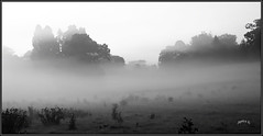 Drifting Mist. (Picture post.) Tags: landscape nature green autumn mist fields trees paysage arbre brume interestingness monochrome