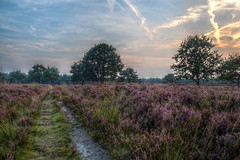 Het Groote Zand, Hooghalen (Gerrit Veldman) Tags: drenthe hooghalen drentselandschap heide heath bomen trees avond evening maan moon lucht sky hdr zonsondergang sunset landschap