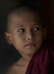 _MG_2315-le-14_04_2016-wat-thail-wattanaram-maesot-thailande-christophe-cochez (christophe cochez) Tags: burmes burma birmanie birman myanmar thailand thailande maesot myawadyy monk bonze novice religion watthailwattanaram travel voyage bouddhisme buddhism portrait
