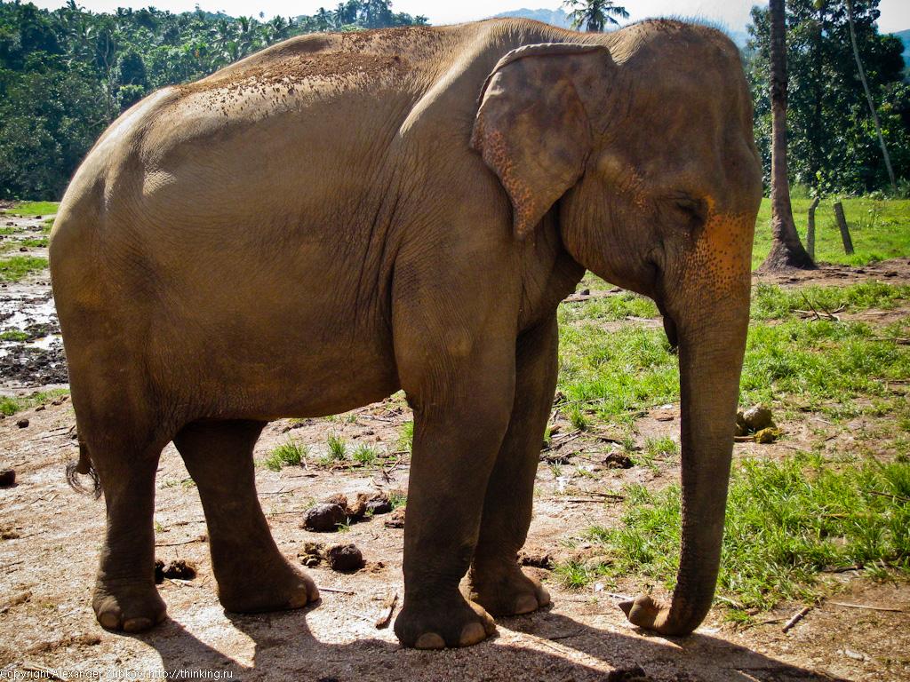 спящий слон картинки недостаткам можно отнести