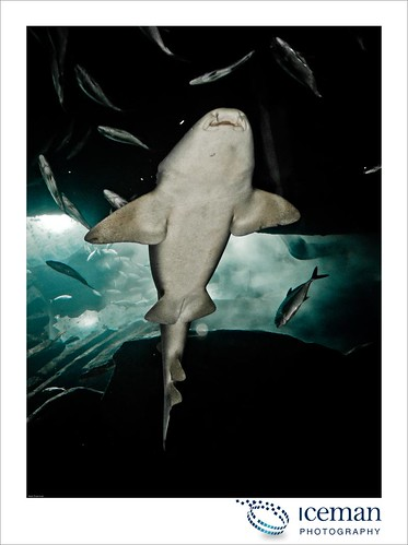 Dubai Aquarium 215